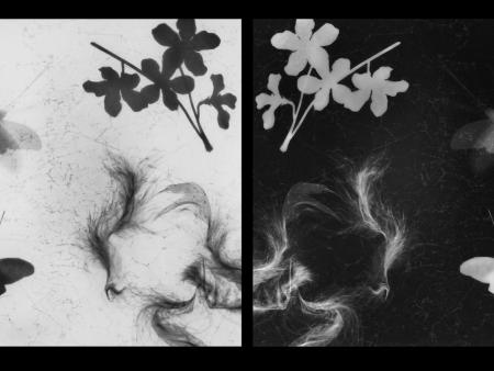 Untitled Photograms, Negative-Positive