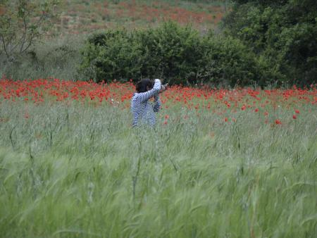 A student in a poppy field taking photos -  Italy 2014